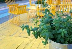 铸造在有黄色桌的罐子在夏天大阳台的桶和椅子 免版税图库摄影