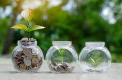 铸造生长从在玻璃瓶子之外的硬币的树玻璃瓶子厂在节约金钱被弄脏的绿色的自然本底和投资 免版税库存照片