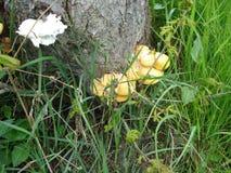 铸造生长在树的树干 免版税库存照片
