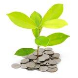 铸造货币堆结构树 免版税库存照片