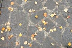 铺有秋天干燥五颜六色的叶子的鹅卵石小径,花岗岩修补 免版税库存照片