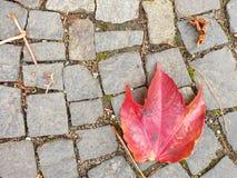 铺有秋天干燥五颜六色的叶子的,花岗岩cobles的鹅卵石小径 库存照片