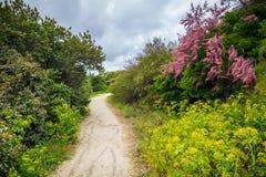 铺沙与海滩草的海滩的道路 对宽含沙beache的方式 免版税库存图片