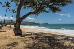 铺沙沿Maili海岸的海滩,奥阿胡岛, Hawai 免版税库存图片