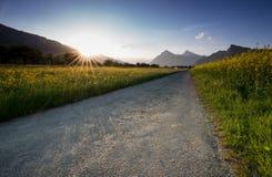 铺石渣分开一个油菜籽油菜领域和一个黄色野花草甸有落日的路消失在一美好的mo后 库存照片