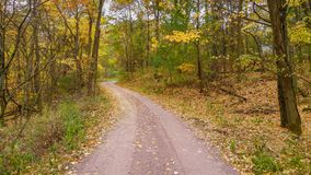 铺石渣在秋天的路与黄色树 库存图片