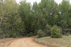 铺石渣在Cango洞和Calitzdorp之间的路 免版税库存图片