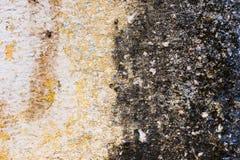 铺磁砖的墙壁的白黄色织地不很细背景有湿气踪影的以一个黑真菌区域的形式 的treadled 图库摄影