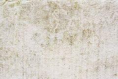 铺磁砖的墙壁的织地不很细背景有湿气踪影的以绿色真菌垂直的形式追踪 grunge 库存照片