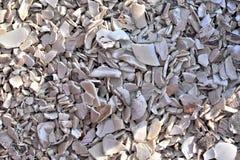 铺背景的被击碎的白色贝壳 库存图片
