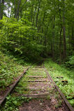 铺铁路入森林 图库摄影