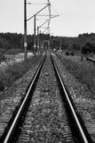 铺铁路入森林 免版税库存图片