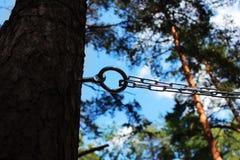 链子和圆环对杉木修理人和鞭打的 施虐受虐狂,报告文学摄影的概念 库存照片