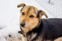 链子束缚的狗在冬天遭受cold_ 库存图片