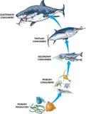 链子海洋的食物 库存照片