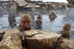 链子猴子 库存照片