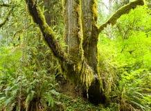 链藏品结构树 库存照片