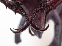 锁黑玩具恐龙的脖子的战斗或犀牛甲虫的发怒腿隔绝在白色背景 免版税库存图片