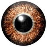 锋利的有吸引力的深褐色的眼睛纹理 免版税库存照片
