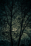 锐化通过树的暮色颜色 免版税库存图片
