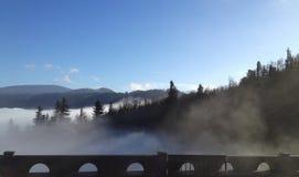 锐化通过薄雾的树和山在波特兰,俄勒冈 免版税库存照片
