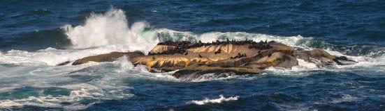 错误海湾-开普敦,南非 库存图片