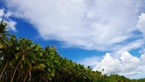 锡基霍尔省棕榈树01 股票录像