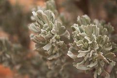 锡安国家公园的植物 免版税库存照片