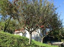 从锡纳亚手段的苹果树剪影在罗马尼亚 库存照片