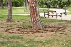 锥体圈子和公园长椅 库存图片