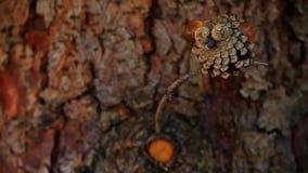 锥体树秋天季节庭院 影视素材