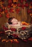 锥体花圈的逗人喜爱的新出生的在一个篮子的婴孩和莓果与秋叶 免版税库存图片
