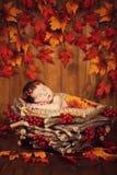 锥体花圈的逗人喜爱的新出生的在一个篮子的婴孩和莓果与秋叶 图库摄影
