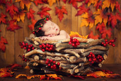 锥体花圈的逗人喜爱的新出生的在一个篮子的婴孩和莓果与秋叶 免版税图库摄影