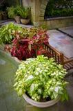 锦紫苏庭园花木盆的空间 库存图片