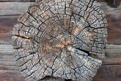 锯切开了年迈的木头 库存照片