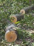 锯在结构树下 库存照片