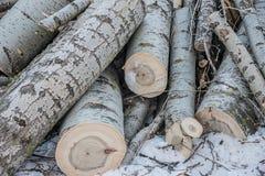 锯成木,在雪日志的谎言 库存照片