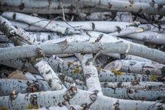 锯成木,在雪日志的谎言 免版税库存照片