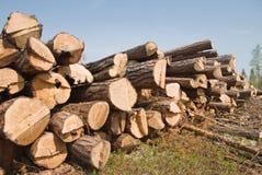 锯木厂 免版税库存照片