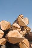 锯木厂 免版税库存图片