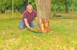 锯老树的男性农夫 中部年迈的人切口果树下来 成熟人,花匠在夏天 库存图片