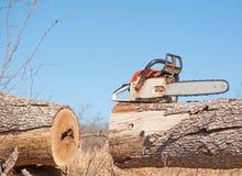 锯被剪切的大结构树 免版税库存照片