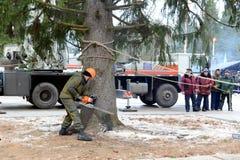 锯设施的伐木工人一棵巨大的树在克里姆林宫 免版税库存照片