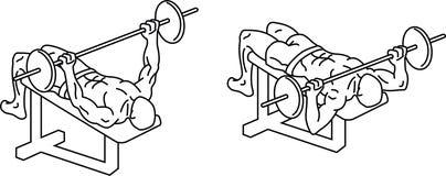 ?? 锻炼和训练与重量 皇族释放例证