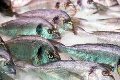 镀金面领袖在地中海市场柜台的鲂鱼 免版税图库摄影