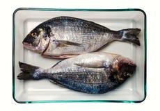 镀金面领袖鲂鱼 健康的食物 库存图片