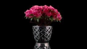 镀铬物花瓶的光滑的圆周运动有一朵豪华活花的 股票录像