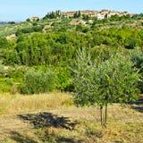镇地平线和橄榄树 免版税库存图片