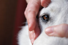 镇定的狗下来 免版税库存照片